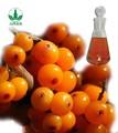 seabuckthorn aceite de bayas