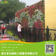 Sol ambiente- amichevole verde parete modulare fioriera muro fiore verde