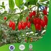 100% natural ningxia goji seed oil