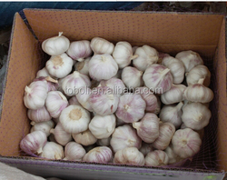 fresh dry normal white red purple garlic