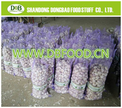 Normal White Garlic wholesale price