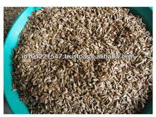 exportación de cedrus deodara semillas