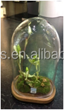 glass domes bell jars