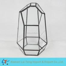 Différentes tailles options verre plantes terrarium