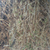Camo brushed tricot with TPU for hunting clothes/alova/cheap camouflage fabric/yellpw camouflage fabric