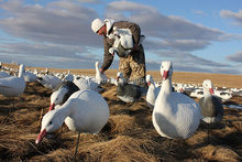 newly designed hot sale foam snow goose decoy, garden decoration snow goose decoy, hot sale hunting goose hunting equipment