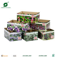 FANCY BOXES FOR FRUIT AND VEGETABLES