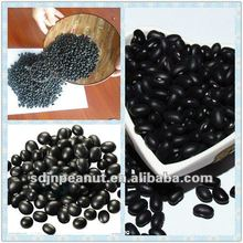 New crop small black kidney beans