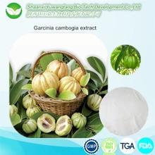Factory supply free sample garcinia cambogia extract manufacturers,50% 60% HCA powder, garcinia cambogia suppliers