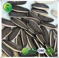 Sunflower Seed Oil Ukraine