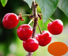 100% organic fruit best selling natural black cherry extract