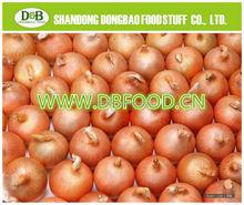 Factory supply New season Fresh Onion 7-9cm yellow onion