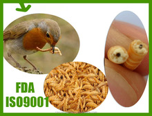 FDA Certification Passed Bird Food Dried Mealworms;Dried Mealworms for Bird