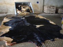 Raw Cattle/Cow Hide
