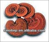BNP Supply Reishi Mushroom Extract/reishi mushroom spores