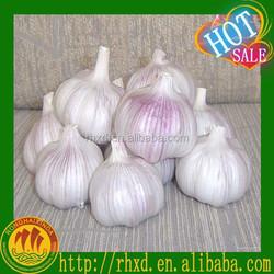 fresh garlic in China garlic price