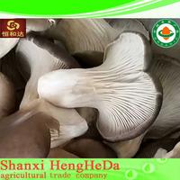 Factory supply qualified growing reishi mushroom