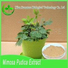 Factory supply 100% natural organic Sensitive Plant Extract powder wholesale