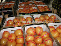 Price of Chinese Grape Fruits Fresh Pomelo