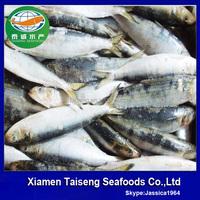 Frozen Sardine Fish Sea Food Fresh /frozen Grade A