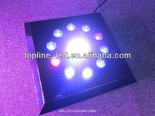 2012 hot selling unique dimmable high power deep drop led fishing neon lighting good for fish/Sargassum/algae