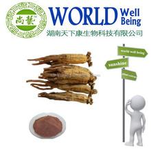 Ginseng Extract Ginsenosides 10% 80% /80% panax notoginsenosides notoginseng triterpenes