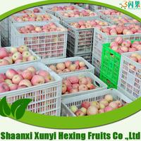 2015 bulk fresh fuji apple fruit for export