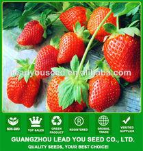 Jsb01 rosa reina de fresa semillas para la venta, semillas de fresa