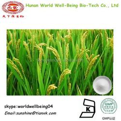 Chinese Herbal Extract Food Grade Ceramides 5%10%20% / Ceramide Powder 98% Cosmetic Grade Powder Form