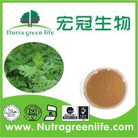 Natural Artemisia annua extract Annual artemisia P.E.