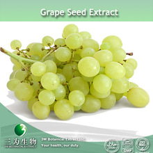 Grape Seed Extract/ 95%OPC/ Polyphenols use in cosmetic field