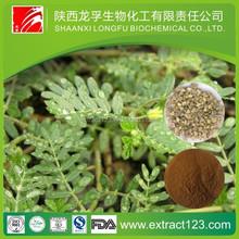 health food tribulus terrestris extract total saponins 80%