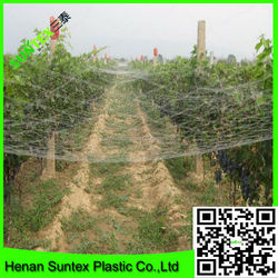 plastic birds net for hunting birds,extruded knotted green color birds net for cherry ,anti wind and snow permeability bird mesh