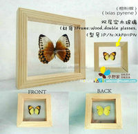 FOUSEN(011) Nature& Art natural species framed insect