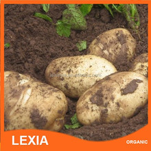 Price of fresh potatoes for 2015 China