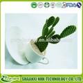 органических hoodia gordonii экстракт кактуса