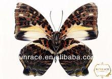 de papel de corte mariposa mariposa pared calcomanía