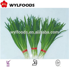 China frozen vegetable good quality Frozen IQF spring onion cuts/slices/baby onion in frozen vegetable price