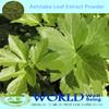100% Natural Angelica Keiskei Extract/Ashitaba Extract Powder/Ashitaba Powder
