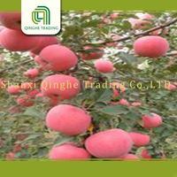 super quality apple fuji apple from shandong 20kg carton