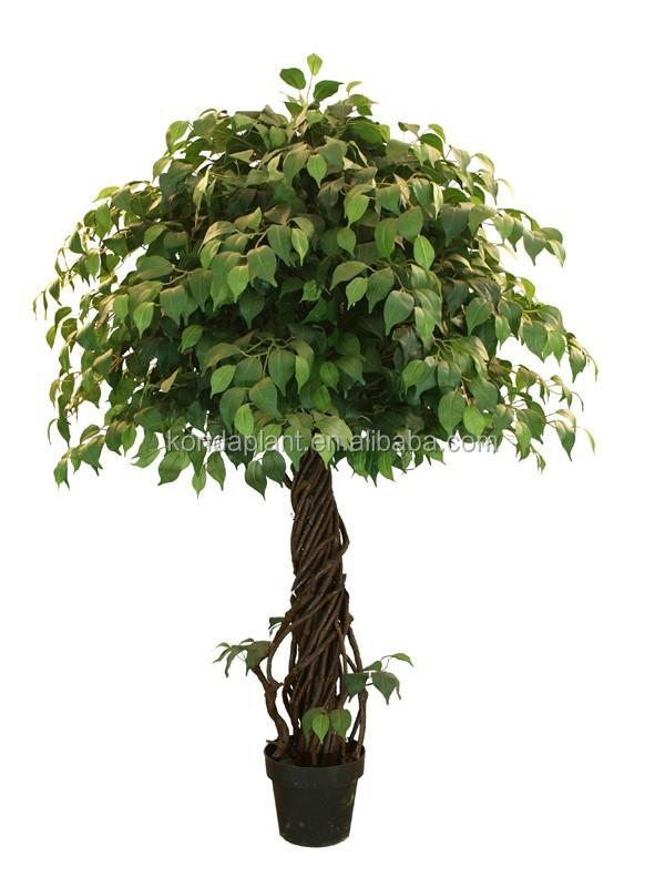 artificial ornamental plants for indoors large indoor plants for sale buy large indoor plants. Black Bedroom Furniture Sets. Home Design Ideas
