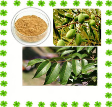Bilk Supply Olive Leaf Extract Powder