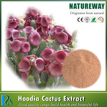 Chinese health supply Hoodia gordonii Botanical Source Opuntia dillenii Haw