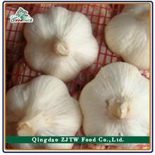 Best seller pure white garlic