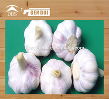 normal white garlic red/normal/pure white garlic factory red/normal/pure white garlic factory