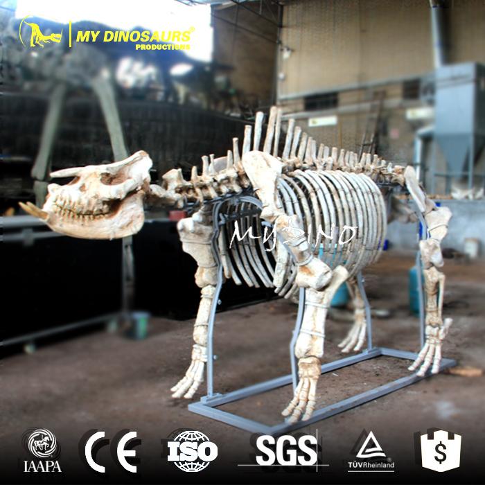 Chilotherium Skeleton.jpg