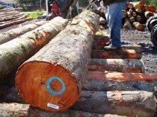 Alder Veneer Logs