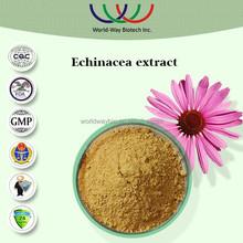 Echinacea purpurea extract free sample factory supply health nutrition phenols chicoric acid echinacea purpurea herb p.e