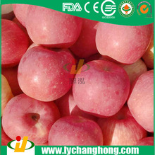 Fuji Apples best price from China supplier