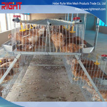 Chicken Cage/Quail Cage Design Pigeon Coops Pigeon Breeding Cage